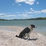 My dog Floss on the beach at Batley.
